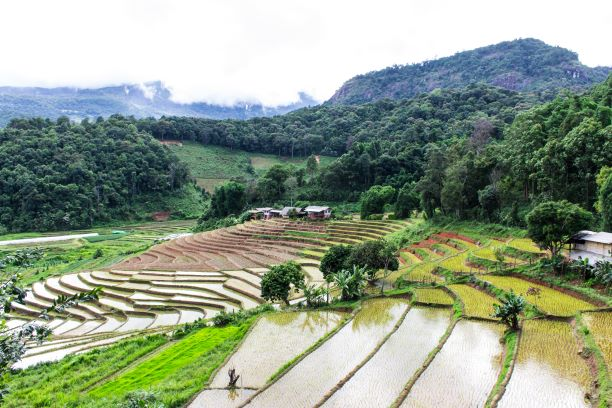 Rice field terraces in doi inthanon, Ban Pha Mon Chiangmai Thail