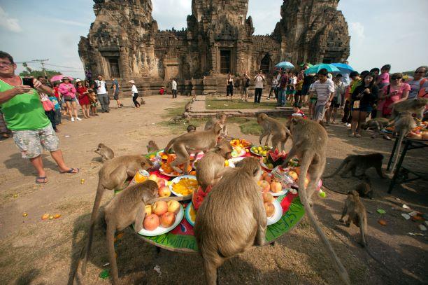 Lopburi Monkey Party- Thailand festival