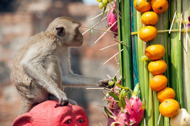 Monkey Banquet Lopburi festival Thailand