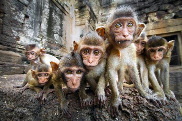 Monkey in Lopburi Thailand- Monkey Banquet festival