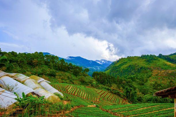 Pha Tang Royal Project Development Center Chiang Rai