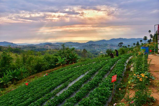 view of Strawberry Farm on the Mountain at KhaoKho in Phetchabun, Thailand