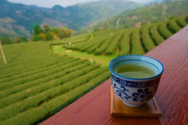 Taste the Finest Oolong Tea