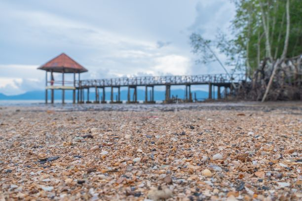 Scattered shells on a black beach. black sand beach is in Trat Thailand