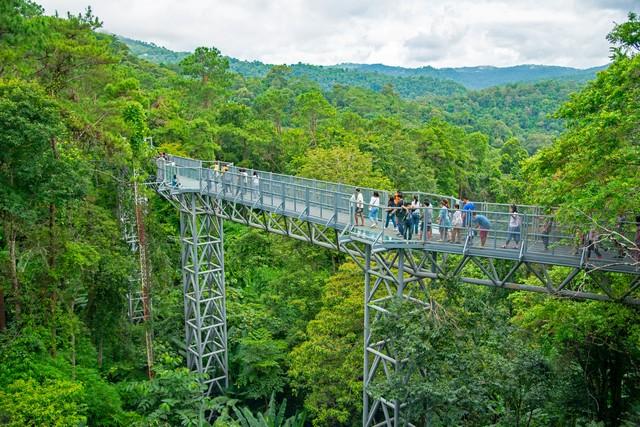 Canopy walkway ,Thailand's longest treetop walkway opens at the Queen Sirikit Botanical Garden