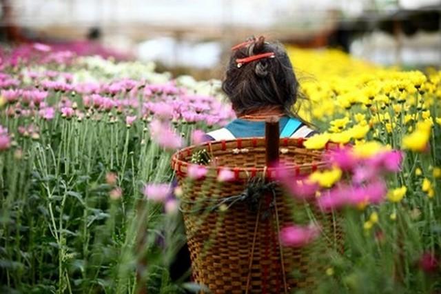 Flower Farm at Khun Wang Royal Project