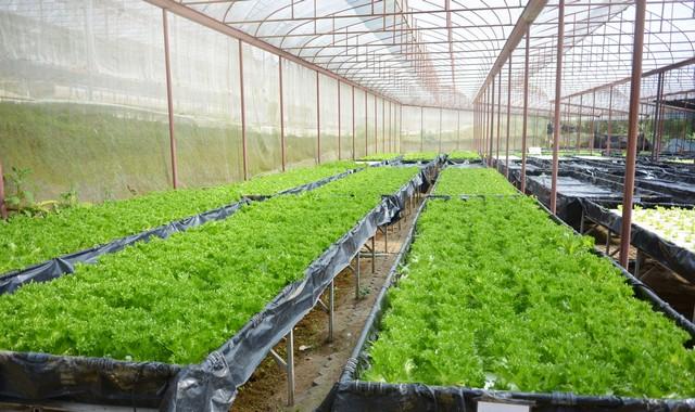 Greenhouse Plant, Royal Project , Doi Inthanon, Chiang Mai
