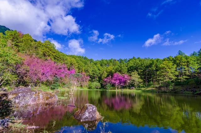 Lake Tree Khun Wang Inthanon Chiang Mai Thailand