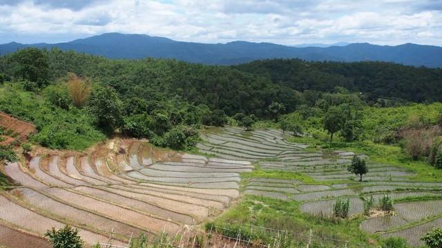 Mae Sapok Farm