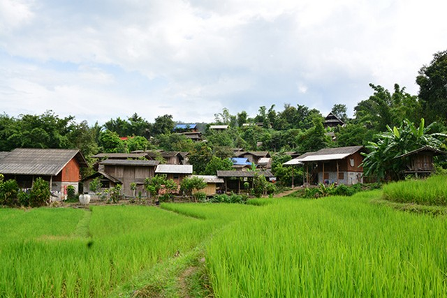 Mae Sapok Royal Project in Chiang Mai