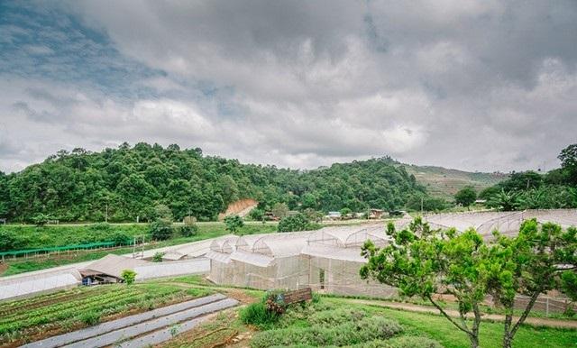 Nong Hoi Royal Project -Chiangmai Thailand