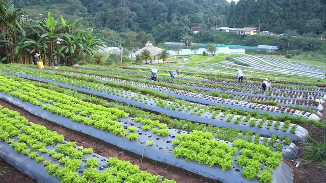 Nong Hoi Royal Project on Doi Mon Cham, Chiang Mai