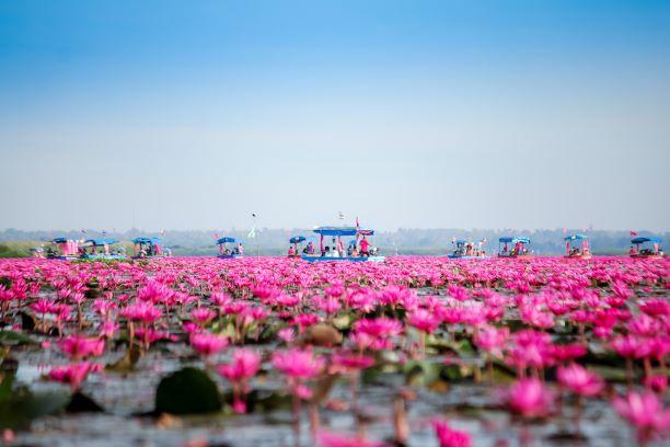 Red Lotus Lake (Nong Han)- Udon Thani
