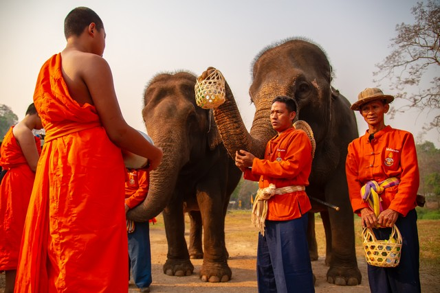 Activities in Thai Elephant Conservation Center Lampang