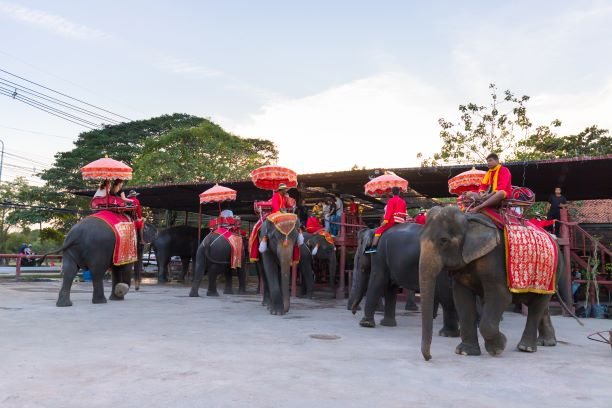 Top 10 Things to do in Ayutthaya-Ayutthaya Elephant Palace & the Royal Elephant Kraal Village