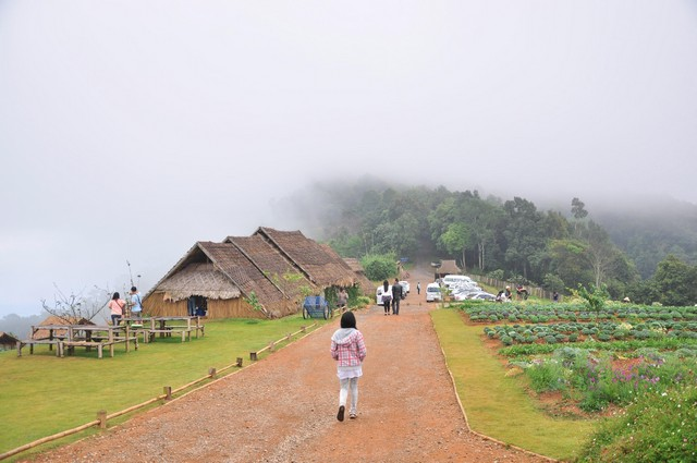 Winter time with fog at Mon Chaem Mountain Chiang Mai