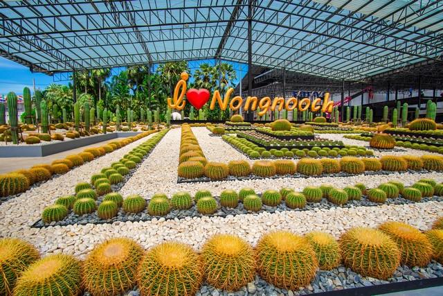 cactus garden at Nong Nooch Tropical Botanical Garden