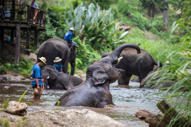 The elephant show at Chiang Mai elephant camp
