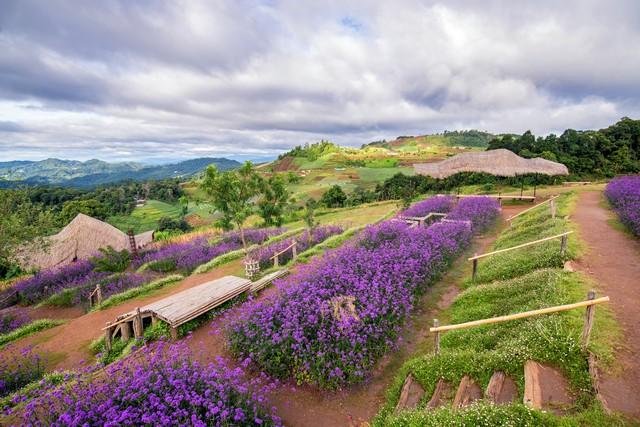 landscapes of purple verbena flower