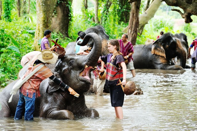 mahouts course in Thailand