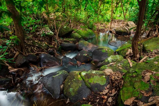 Forest in Thailand,Phang nga,Koh yao yai