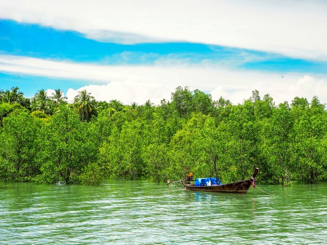 mangrove forest with cloudy sky backdrop in Koh Yao Yai Island Thailand