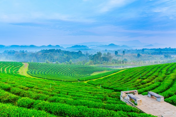 Touch with fresh Choui Fong Tea Plantation atmosphere.