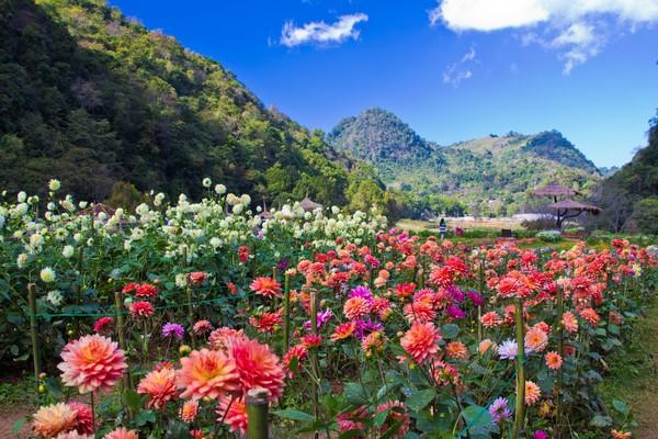 Temperate Flower Garden