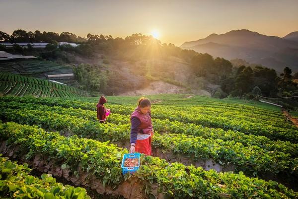 Temperate Fruit Garden in Angkang