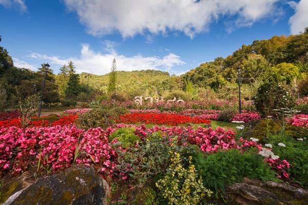 Suan 80 or Garden 80