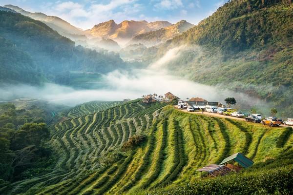 Tea Plantation 2000 at Ang khang