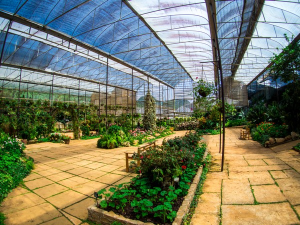 Rose Greenhouse in The Royal Agricultural Station Angkhang