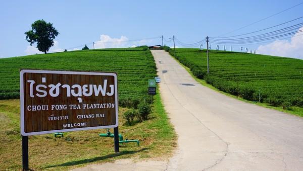 About Choui Fong Tea Plantation