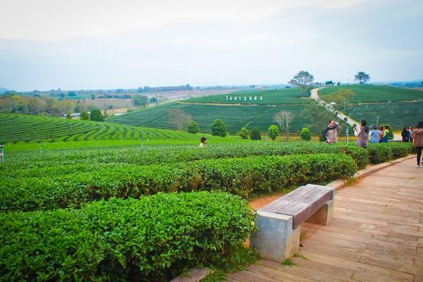 Take beautiful photos in Chou Fong Tea Plantation